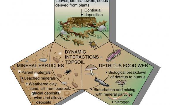 Dynamic soil interactions