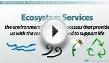 What is Environmental Science? - Definition and Scope of